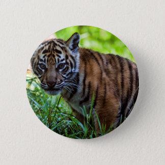 Hi-Res Sumatran Tiger Cub Button