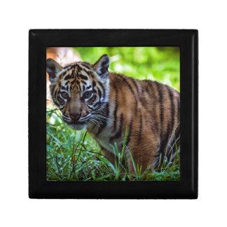 Hi-Res Sumatran Tiger Cub Jewelry Box