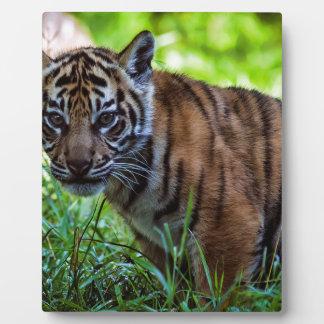 Hi-Res Sumatran Tiger Cub Plaque