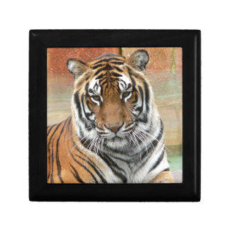 Hi-Res Tigres in Contemplation Jewelry Box