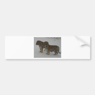 Hi-Res Two Siberian Tigers Bumper Sticker