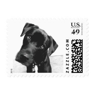 Hi Stamp