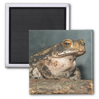 Hi Toad! 2 Inch Square Magnet