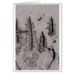 Hi! Written in Florida beach sand with footprints Greeting Cards