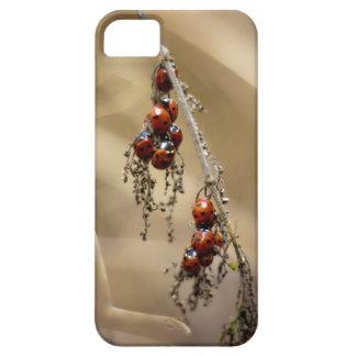 Hibernating Ladybug Cluster iphone 5 cover