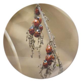 Hibernating Ladybug Cluster plate
