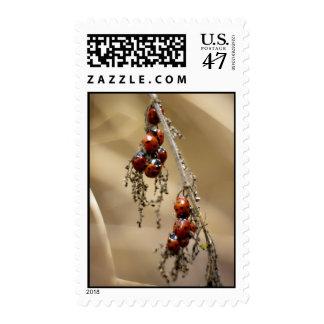 Hibernating Ladybug Cluster postage stamps