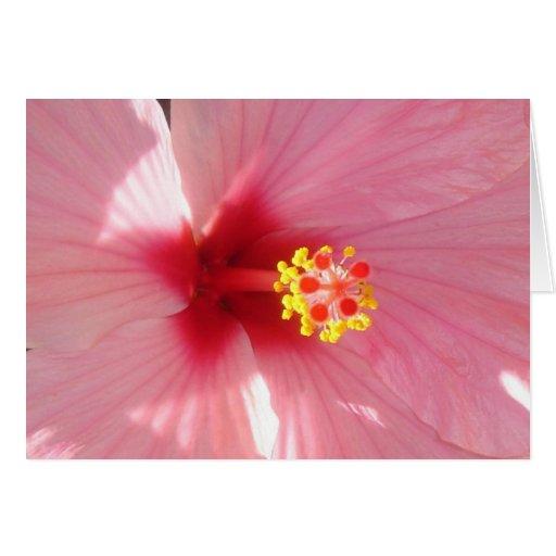hibisco 2 tarjeta de felicitación