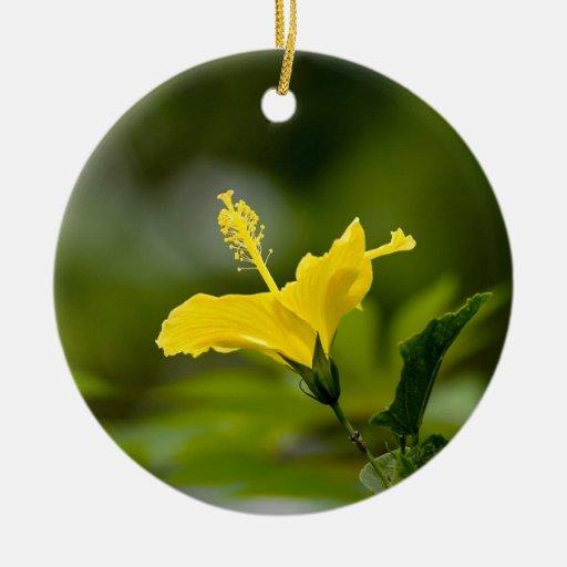 Hibisco amarillo adorno