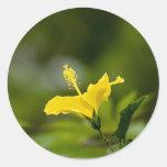 Hibisco amarillo etiqueta redonda