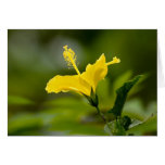 Hibisco amarillo felicitación