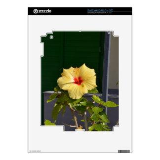 Hibisco amarillo iPad 2 calcomanías