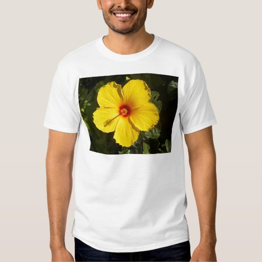 Hibisco amarillo playeras