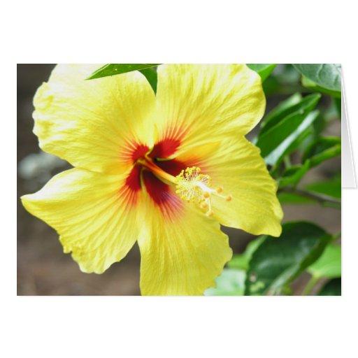 Hibisco amarillo tarjeta de felicitación