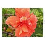 Hibisco anaranjado brillante tarjeta de felicitación