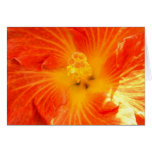 Hibisco anaranjado tropical felicitacion