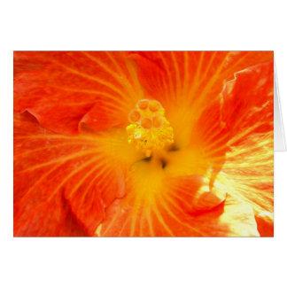 Hibisco anaranjado tropical tarjeta de felicitación