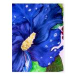Hibisco azul postales