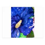 Hibisco azul tarjetas postales