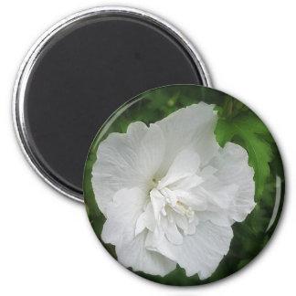 Hibisco blanco 1 encanto imán redondo 5 cm
