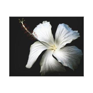 Hibisco blanco contra black.jpg lienzo envuelto para galerias