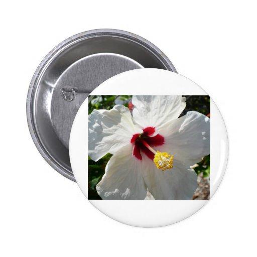 Hibisco blanco grande pin
