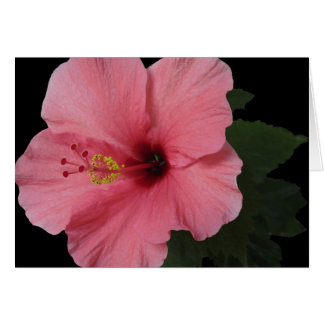 Hibisco coralino felicitacion