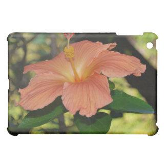Hibisco coralino