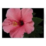 Hibisco coralino tarjeta de felicitación
