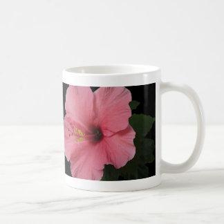 Hibisco coralino taza de café