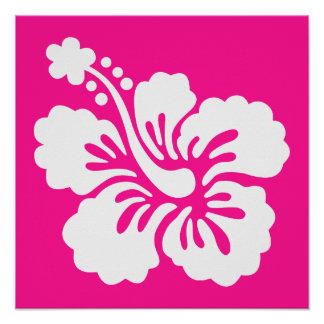 Hibisco de color rosa oscuro y blanco póster