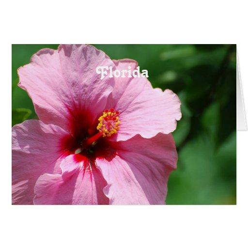 Hibisco de la Florida Tarjeta De Felicitación