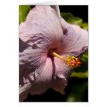 Hibisco de Lavendar Tarjeta De Felicitación