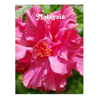 Hibisco de Malasia Tarjeta Postal