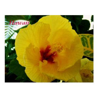 Hibisco del amarillo de la flor de Hawaii Postales