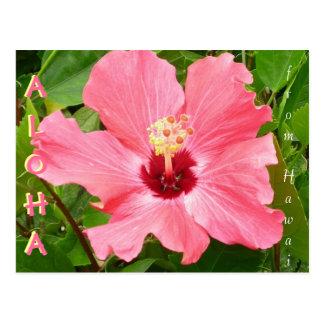 Hibisco en el color coralino rosado de Hawaii