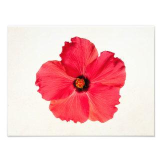 Hibisco - flor tropical personalizada de las rosas impresiones fotograficas