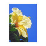 Hibisco hawaiano impresión en lienzo estirada