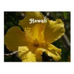 Hibisco hawaiano tarjeta postal