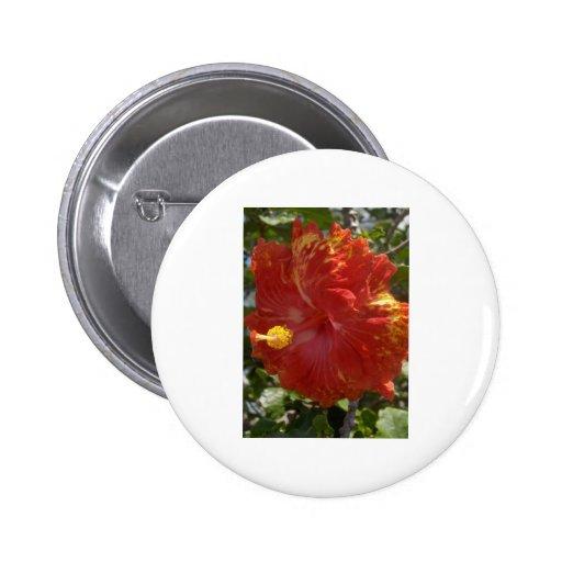 Hibisco Pin Redondo 5 Cm