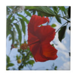 Hibisco rojo azulejo