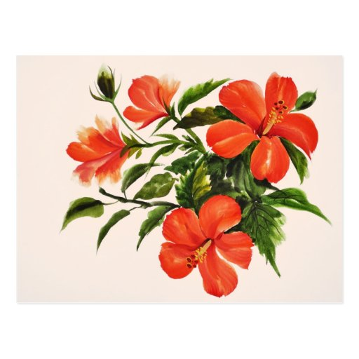 Hibisco rojo caliente postal