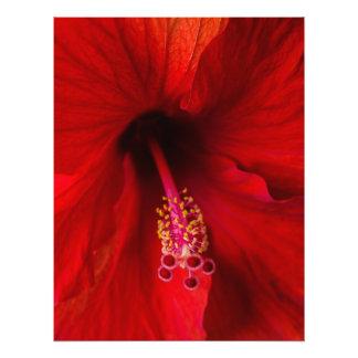 Hibisco rojo cojinete