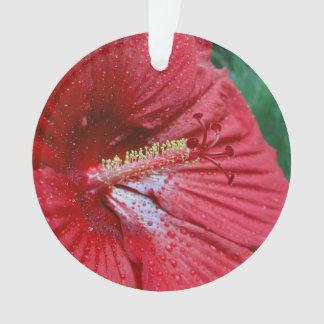 Hibisco rojo con las gotas de agua