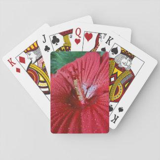 Hibisco rojo con las gotas de agua barajas de cartas