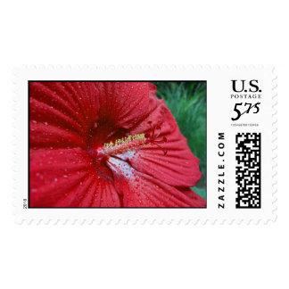Hibisco rojo con las gotas de agua - grandes sello
