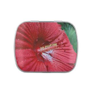 Hibisco rojo con las gotas de agua jarrones de dulces