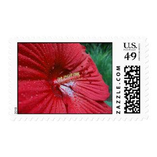 Hibisco rojo con las gotas de agua - medio sello