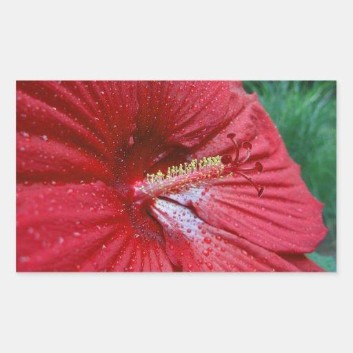 Hibisco rojo con las gotas de agua pegatina rectangular