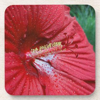 Hibisco rojo con las gotas de agua posavasos